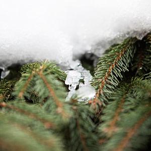 Green / Snowy