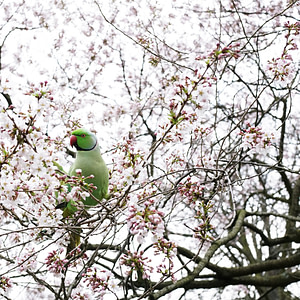 Hyde park at spring
